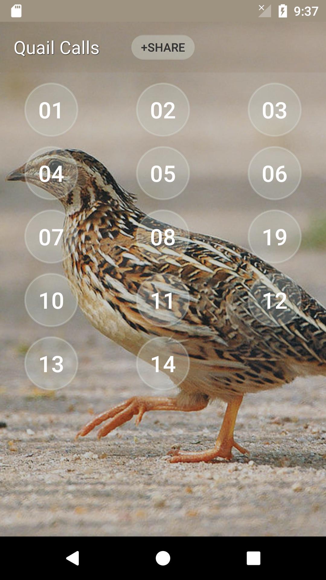 Quail Bird (Animal) Sounds screenshot 2
