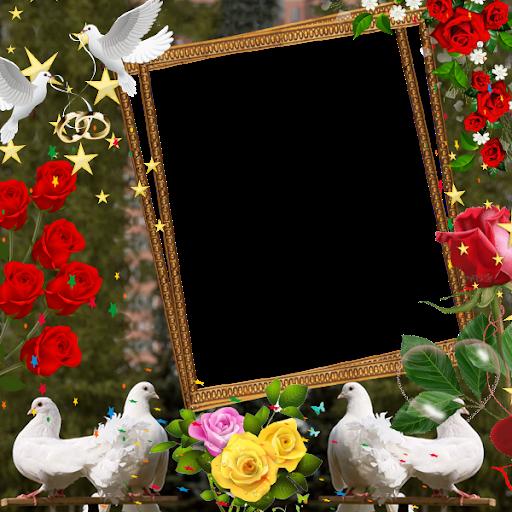 Love Birds Insta DP : Bird DP Frames & Wallpapers screenshot 2