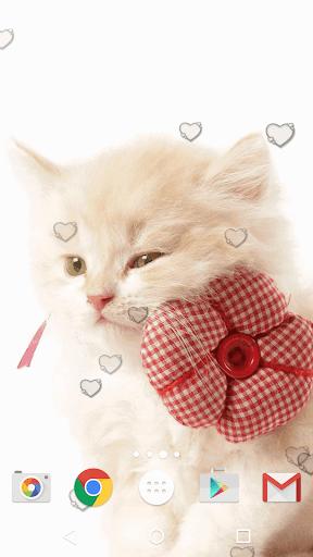 جذاب القطط خلفيات حية 3 تصوير الشاشة