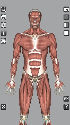3D Bones and Organs (Anatomy) 2 تصوير الشاشة