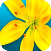 Gallery & Video Gallery on 9Apps