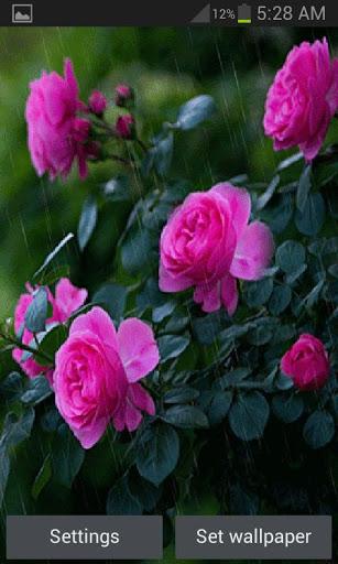 Rainy Pink Flowers LWP скриншот 1