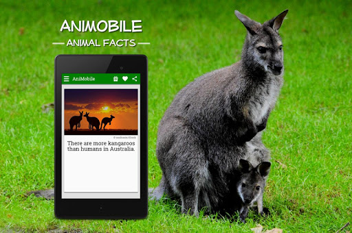 Funny Animal Facts with Pictures 8 تصوير الشاشة