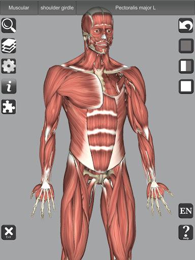 3D Bones and Organs (Anatomy) 10 تصوير الشاشة