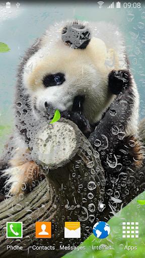 Cute Panda Live Wallpaper screenshot 3