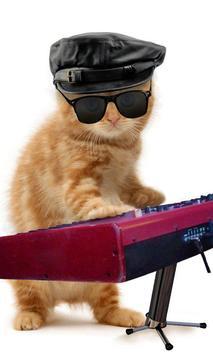 القطط مضحك. الرقص واللعب 3 تصوير الشاشة