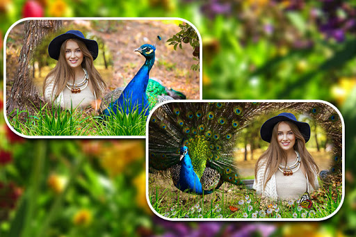 Peacock Photo Frames screenshot 3