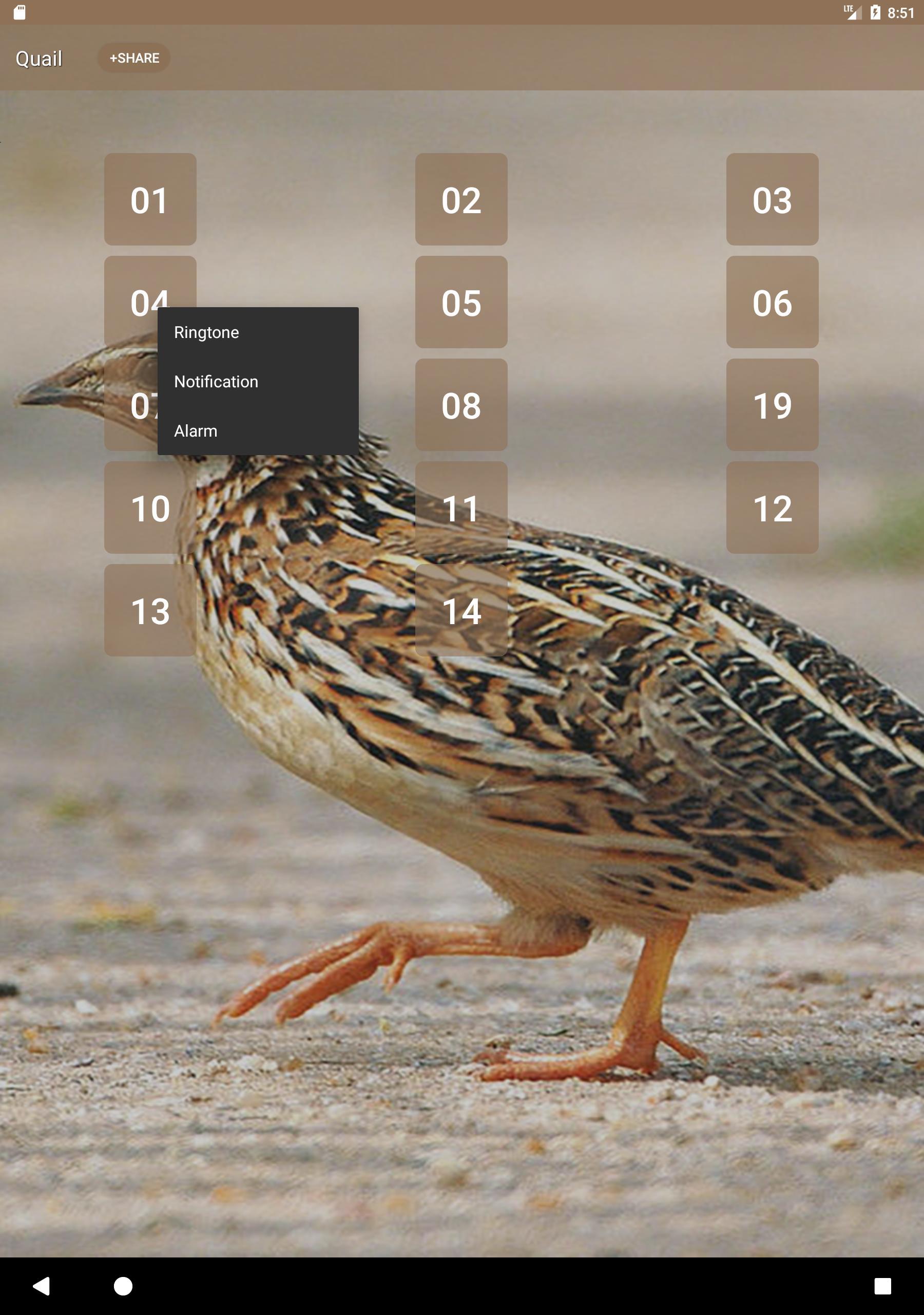 Quail Bird (Animal) Sounds screenshot 6