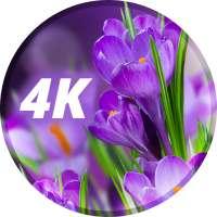 صور مع الزهور on 9Apps