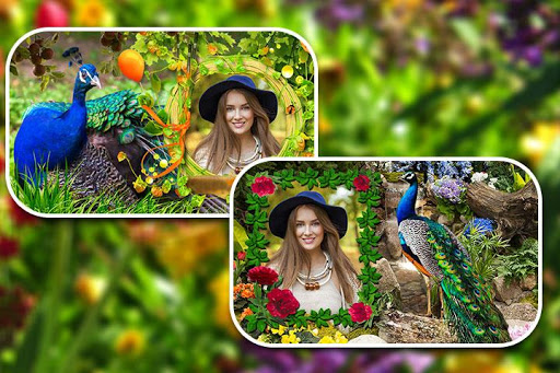 Peacock Photo Frames screenshot 15