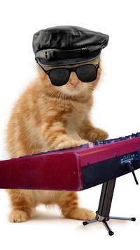 القطط مضحك. الرقص واللعب 10 تصوير الشاشة