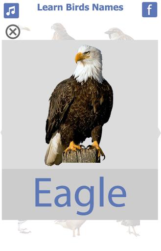 Birds name in English screenshot 6
