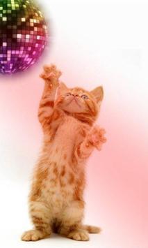 القطط مضحك. الرقص واللعب 7 تصوير الشاشة