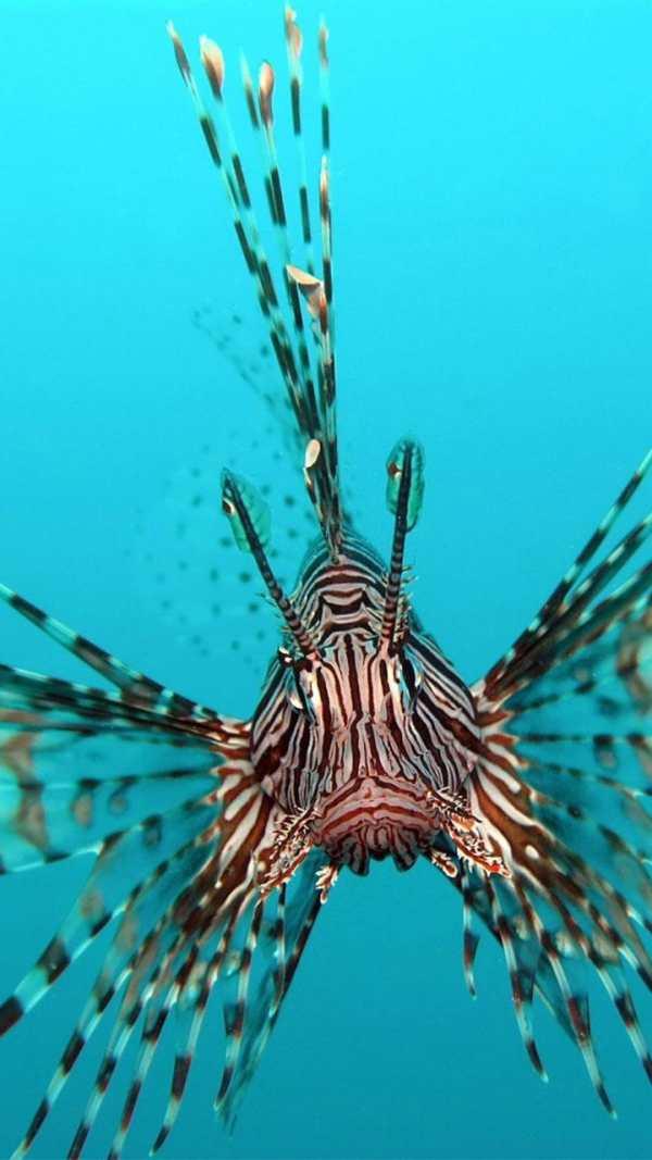 Ocean Fish Live Wallpaper ? Animated Aquarium screenshot 1