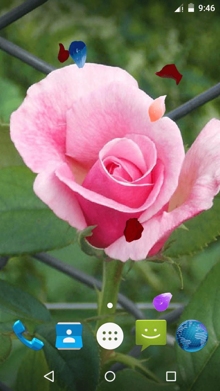 Magic Touch - Pink Rose Flower LWP скриншот 4