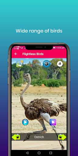 100 suara burung: nada dering, wallpaper screenshot 7