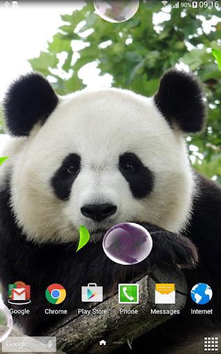 Cute Panda Live Wallpaper screenshot 8