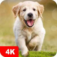 Dog Wallpapers & Puppy Backgrounds on 9Apps