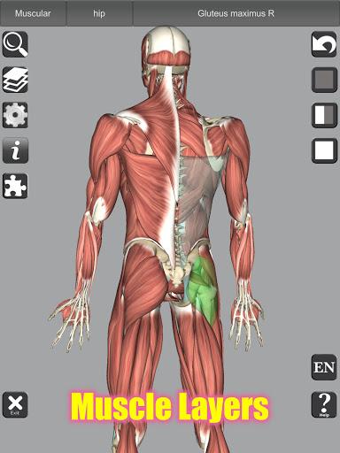 3D Bones and Organs (Anatomy) 11 تصوير الشاشة
