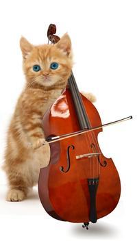 القطط مضحك. الرقص واللعب 8 تصوير الشاشة