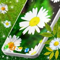 3D Daisy Live Wallpaper 🌼 Spring Field Themes on APKTom